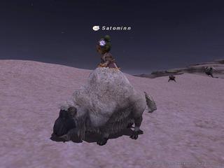 sheepmount.jpg